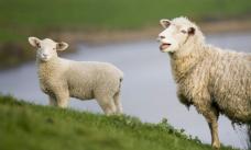 羊_Fotor
