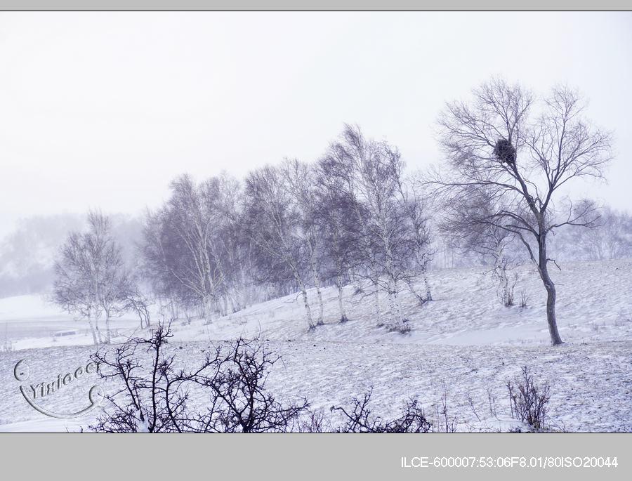 风雪3-12