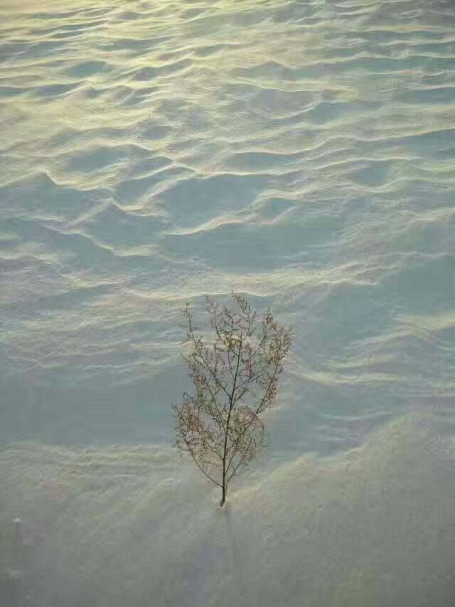 冬季雪景4