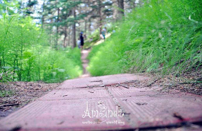 森林公园1